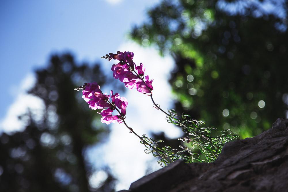 dubrovnik flowers anamarijabujic.com